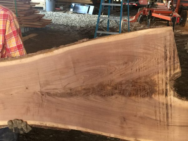 Black Walnut Crotch Slab