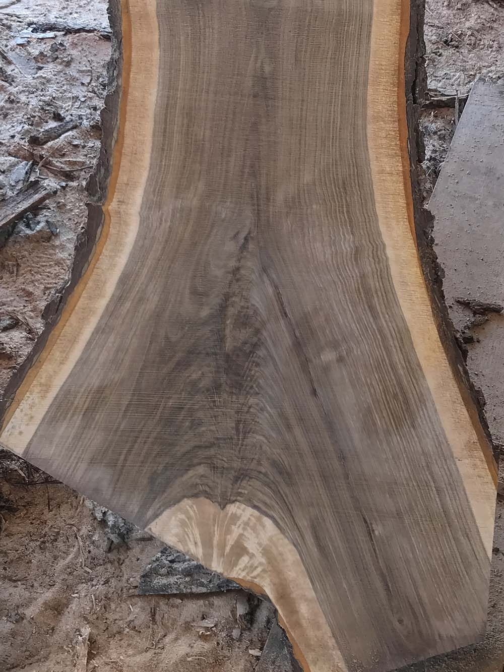 Live Edge Walnut Crotch Slab. Black Walnut Crotch Slab