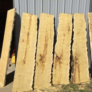 osage orange live edge slabs for sale